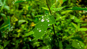 Природа, сад, цветок, зеленый цвет, дерево Стоковое Фото