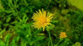 Природа, сад, цветок, зеленый цвет, желтый Стоковое Изображение