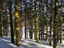 Природа снега дерева Стоковые Изображения