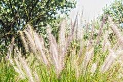 Природа совершенна Стоковая Фотография RF