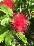 Природа сладостной предпосылки цветка супер внушительная Стоковая Фотография
