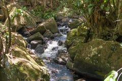 Природа с водопадом и поток в Itacare стоковое изображение rf