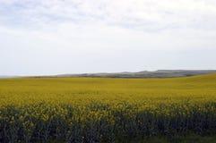 Природа с желтыми цветками Стоковое Изображение RF