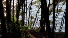 Природа тишь Релаксация раздумье сток-видео