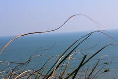 природа травы конца предпосылки осени вверх Стоковые Изображения