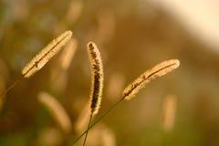 природа травы конца предпосылки осени вверх Стоковая Фотография