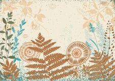 природа травы конца предпосылки осени вверх Стоковое Изображение