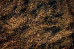 природа травы конца предпосылки осени вверх Стоковая Фотография RF