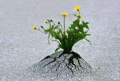 природа усилия Стоковая Фотография