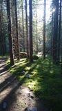 Природа Финляндии Стоковое Изображение