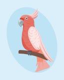 Природа цвета зоопарка пера живой природы иллюстрации вектора птицы дикого животного попугая шаржа тропическая яркая бесплатная иллюстрация