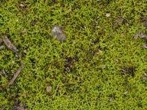 природа цветет макрос стоковые фото