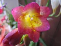 Природа, цветки и заводы Стоковая Фотография