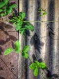 Природа цинка загородки Стоковые Фото