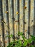 Природа цинка загородки Стоковые Изображения