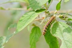 Природа червя стоковое изображение
