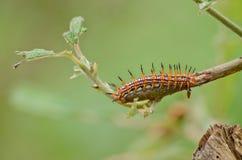 Природа червя стоковое фото rf