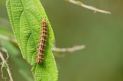Природа червя стоковая фотография rf