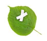 природа экологичности c относящая к окружающей среде сохраняет Стоковое Фото