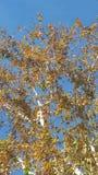 природа людской мати стороны предпосылок abstruct естественная Стоковая Фотография RF