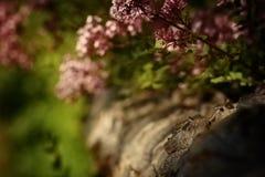 Природа (43) Стоковое фото RF