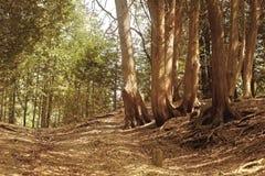 Природа (62) Стоковые Фотографии RF