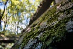 Природа Стоковые Изображения RF