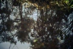 Природа Стоковое фото RF