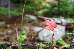 Природа Стоковые Фото
