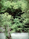 Природа Стоковое Изображение