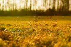 Природа & Bokeh Стоковая Фотография RF