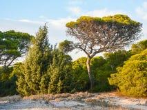 Природа habitat среднеземноморские maquis стоковая фотография