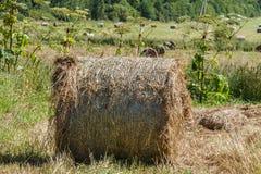 природа haystack поля состава Катушка сена Стоковое фото RF