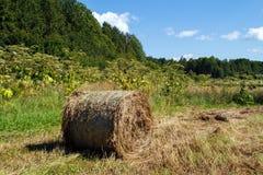 природа haystack поля состава Накошенное сено Стоковые Изображения RF