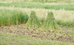природа haystack поля состава Стоковое Фото