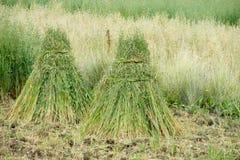 природа haystack поля состава Стоковые Фото