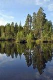 Природа Karelia Стоковое Фото