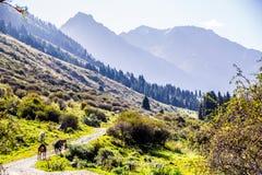 Природа Kirgiz зоны Kol алы стоковое фото rf