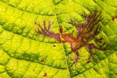 Природа leafdrawing Стоковые Изображения RF