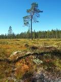Природный заповедник Norra Mora Vildmark Стоковые Фото