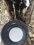 Природный каучук стоковые изображения rf