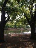 Природный парк Стоковые Фото