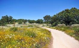 Природный парк Cornalvo, провинции Бадахоса, Испании Стоковая Фотография