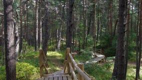 Природный парк Ragakapa в Jurmala, Латвии стоковые фото
