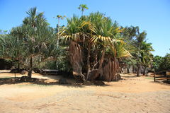 Природный парк Vanille Ла Стоковое фото RF