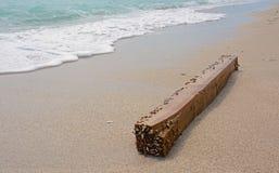 Приставанная к берегу деревянная балка при прикрепленные Clams младенца Стоковое Изображение