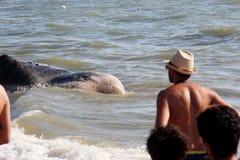 приставанный к берегу кит Стоковые Фото