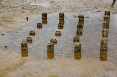 Пристани с устрицами в море Стоковое Изображение