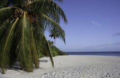 пристаньте голубую белизну к берегу вала неба pam океана Мальдивов Стоковое Изображение