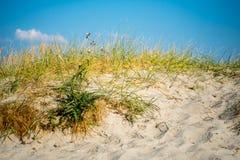 Пристаньте дюну к берегу с травой и песком на горячий солнечный день в северной Германии Стоковые Изображения